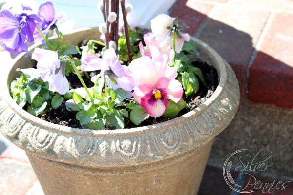 potted_pansies