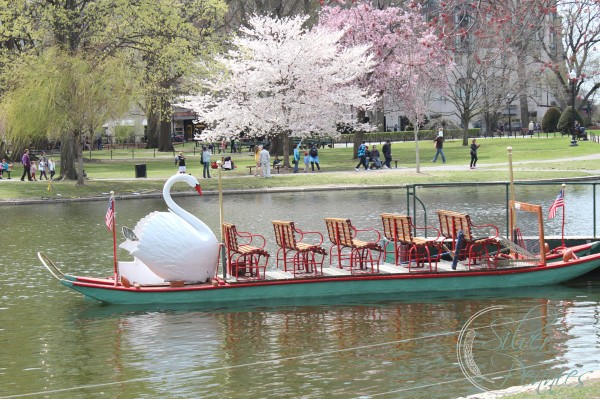 The Swan Boats and Spring