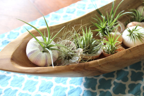 airplants_close_up