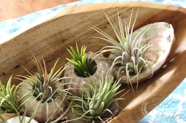 airplants_table