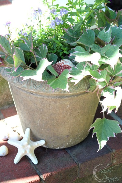star shells_summer_planters