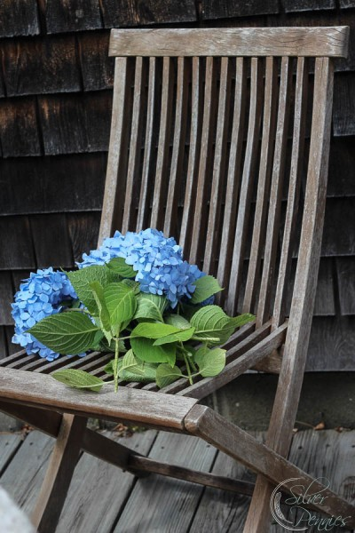 Teak Chair and Hydrangea