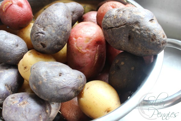 red_bliss_potatoes