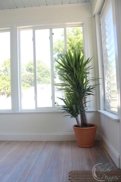 yucca_plant_driftwood_floors