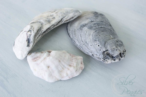 Mussel Shells and Blue Wash