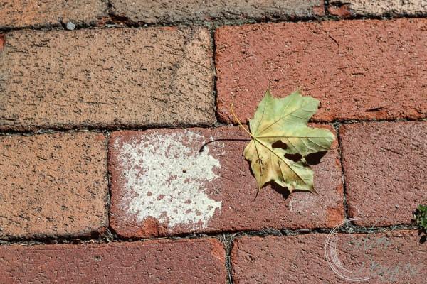 Limed Brick Inspiration