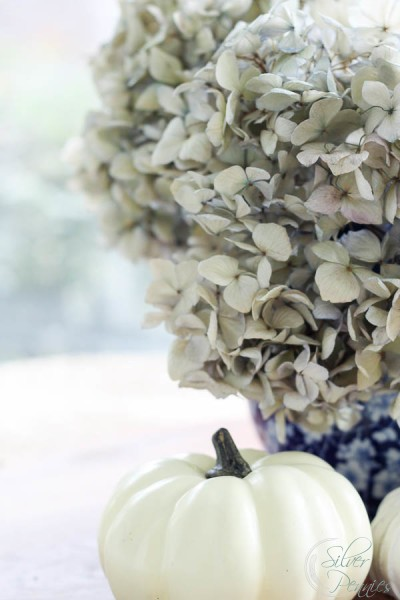 Dried Hydrangeas and Pumpkins