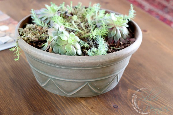 Succulents with stained wood