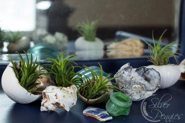 Airplants and Sea Glass