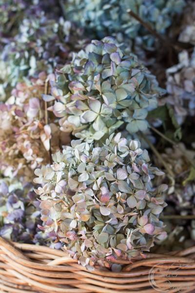 Basket of Dried Hydrangeas