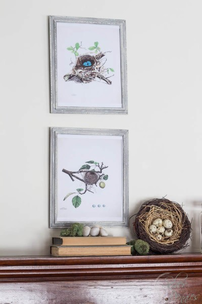 Mantel with Nest Artwork