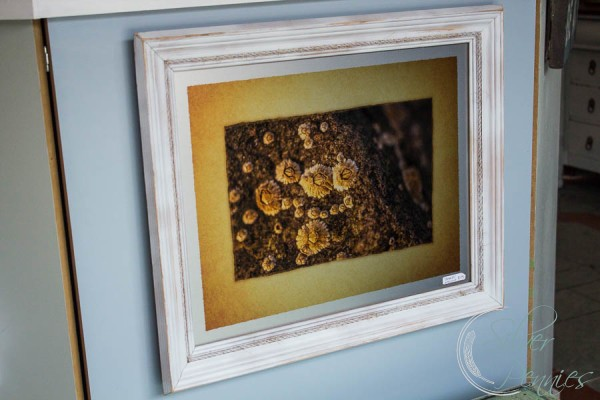 Barnacle Photograph on Metal Kjeld Mahoney Photography