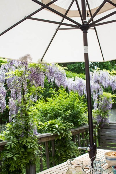 Wisteria and Sunbrella Umbrella