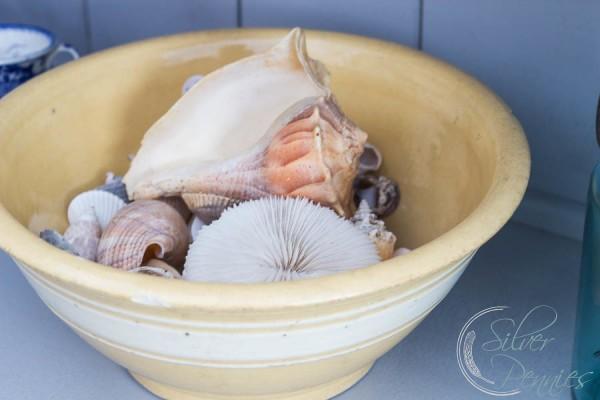 Bowl of Shells