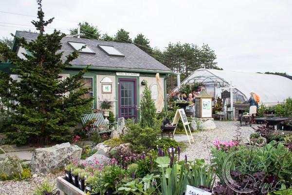 Greenhouse Vintage Bazaar