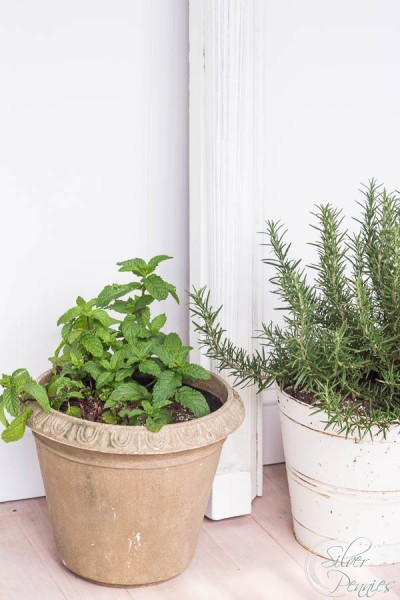 Herbs by mantel