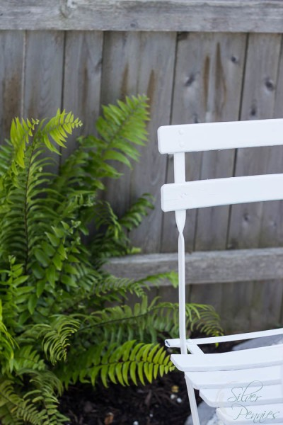 Fern and Patio Set