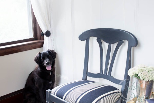 Poppy and my newly painted chairs