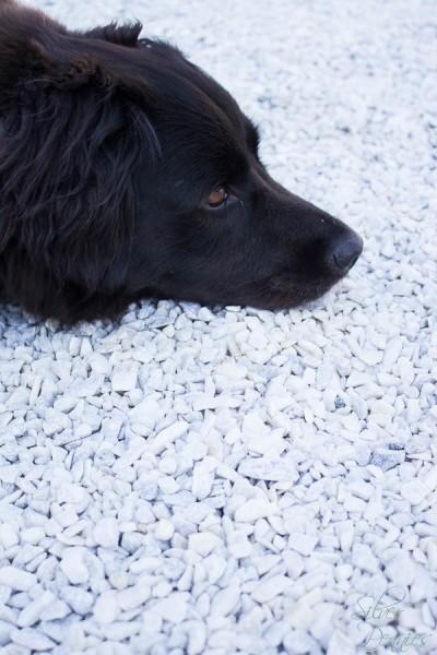 Poppy enjoying the gravel patio