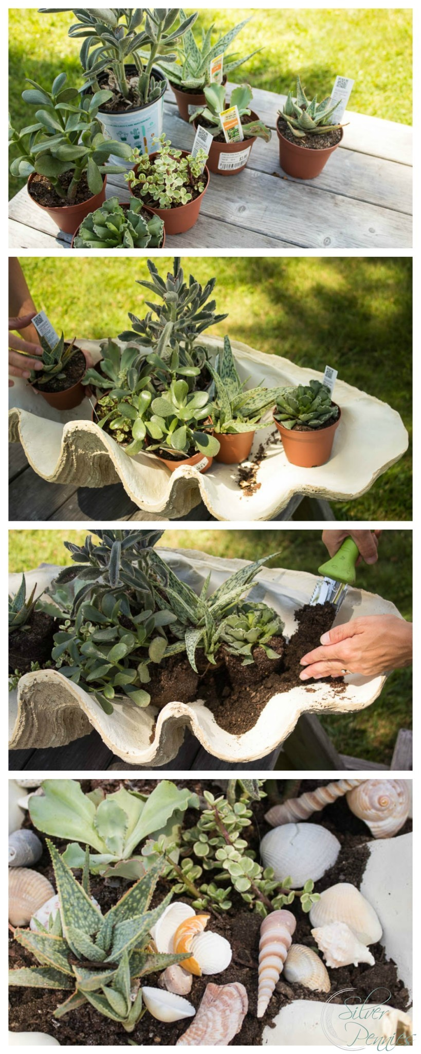 Steps for Creating a DIY Succulent Planter