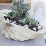 She Shed: DIY Giant Shell with Succulents