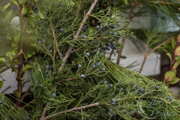 Blueberry Cedar