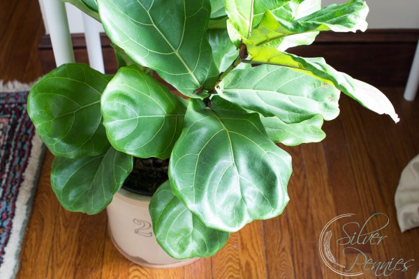 5 plants you won 39 t kill i promise finding silver pennies for Easy plants to care for