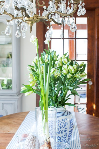 Celebrating Spring with paperwhite bulbs in the dining room.