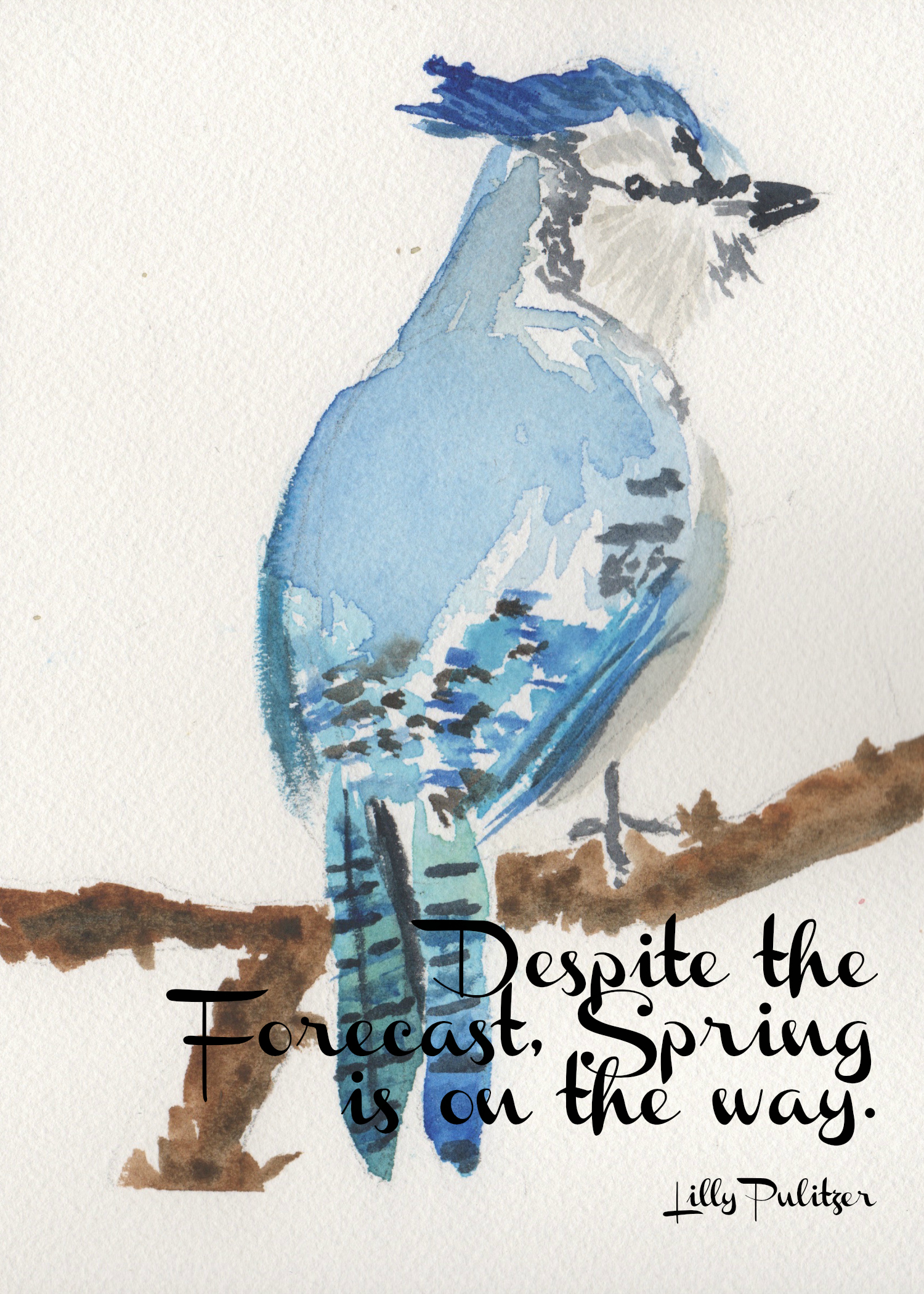 picture about Free Printable Watercolor Pictures to Paint called Blue Jay Watercolor No cost Printable - Getting Silver Pennies