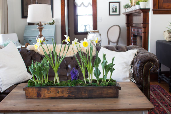 Planter_Living_Room