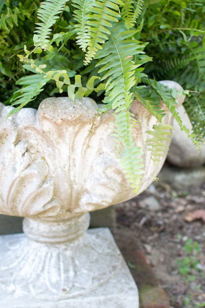 Beautiful ferns in an antique urns welcomes guests to our home.