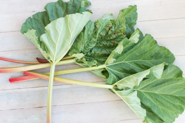 Home Grown Rhubarb