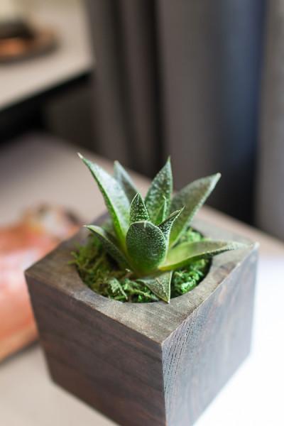 Succulent on a child's desk.