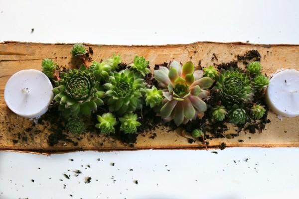 succulent-5-768x512