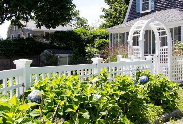 Hydrangeas love an abundance of sunlight. Get more tips on caring for your hydrangeas.