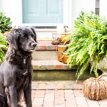 A Welcoming Front Porch for Fall