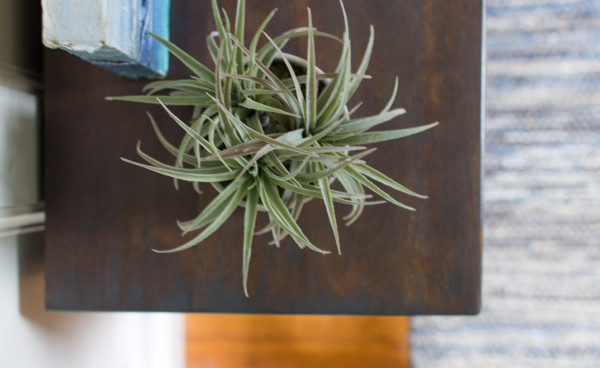 Lovely wood and soft air plants for the perfect coastal style.