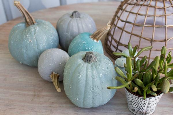 Lovely Saltwash Pumpkins - perfect for a coastal autumn.