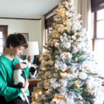 Gifts We Love for Dogs