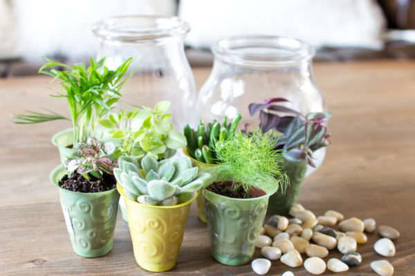 Materials for DIY Terrariums I Finding Silver Pennies