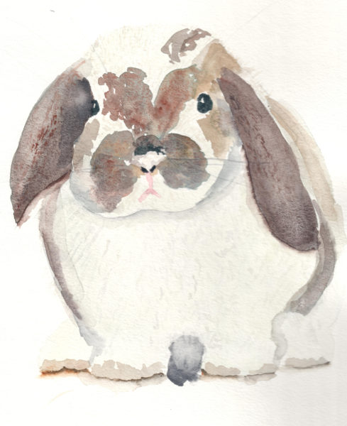 A flop eared bunny, watercolor by Finding Silver Pennies