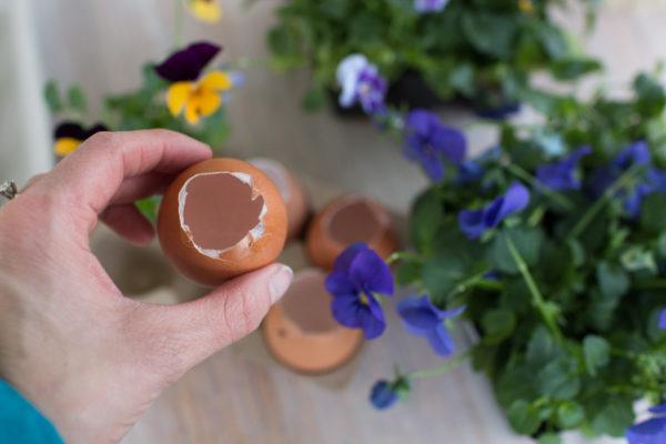 Pansies in Eggshells I Finding Silver Pennies