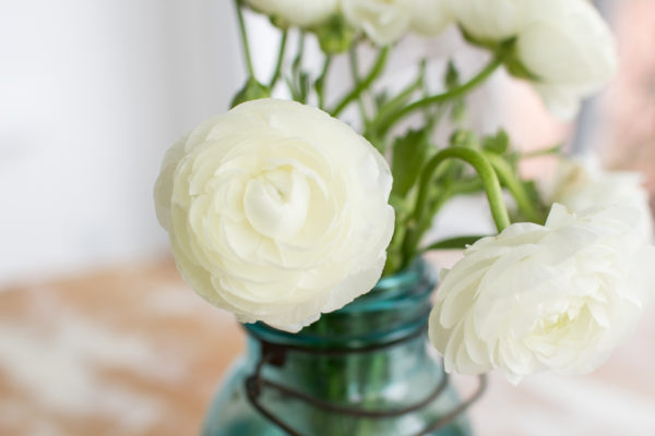 Ranunculus and a Weathered Table I Finding Silver Pennies
