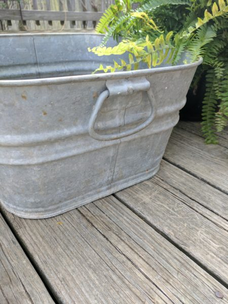 Galvanized Buckets are Perfect with Boston Ferns I Finding Silver Pennies