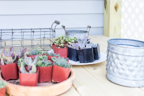 Planting in Our Potting Shed I Finding Silver Pennies