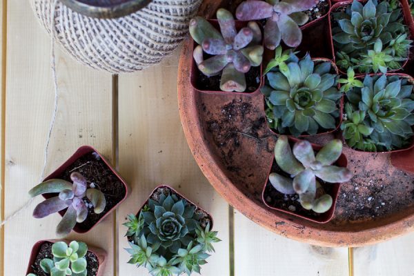 Planting in Our New Potting Shed I Finding Silver Pennies