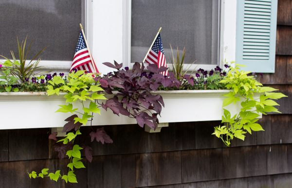 Pretty window boxes have a patriotic twist with trailing vines.