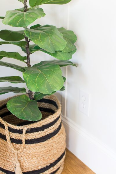 Fiddle leaf figs and board and batten make me happy!