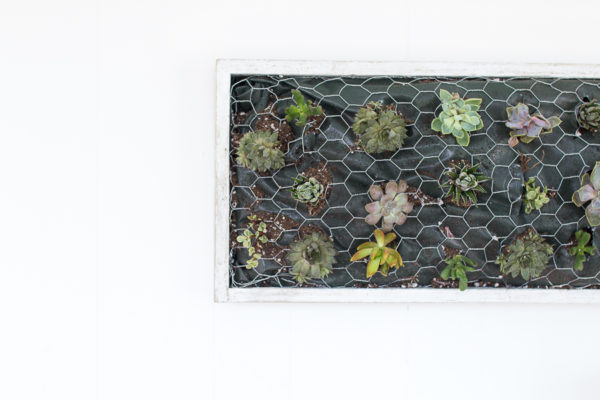 DIY Coastal Succulent Wall Hanging