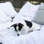 Staycation, Reloved & Living Simply